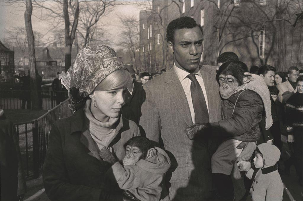 Central Park Zoo, New York, 1967 (courtesy Fraenkel Gallery, San Francisco)