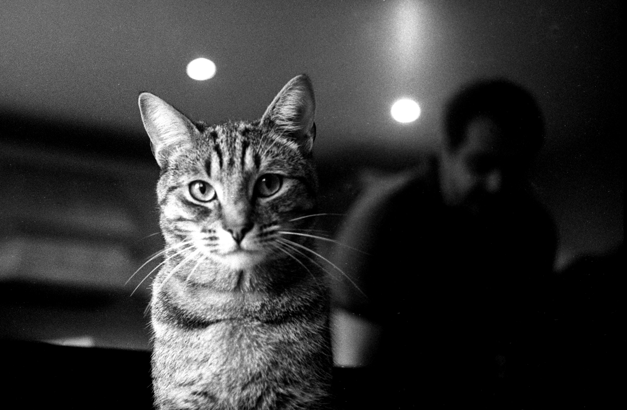 Cat on black-and-white film