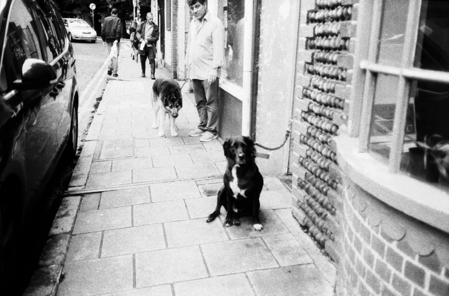 Dogs on Brighton street