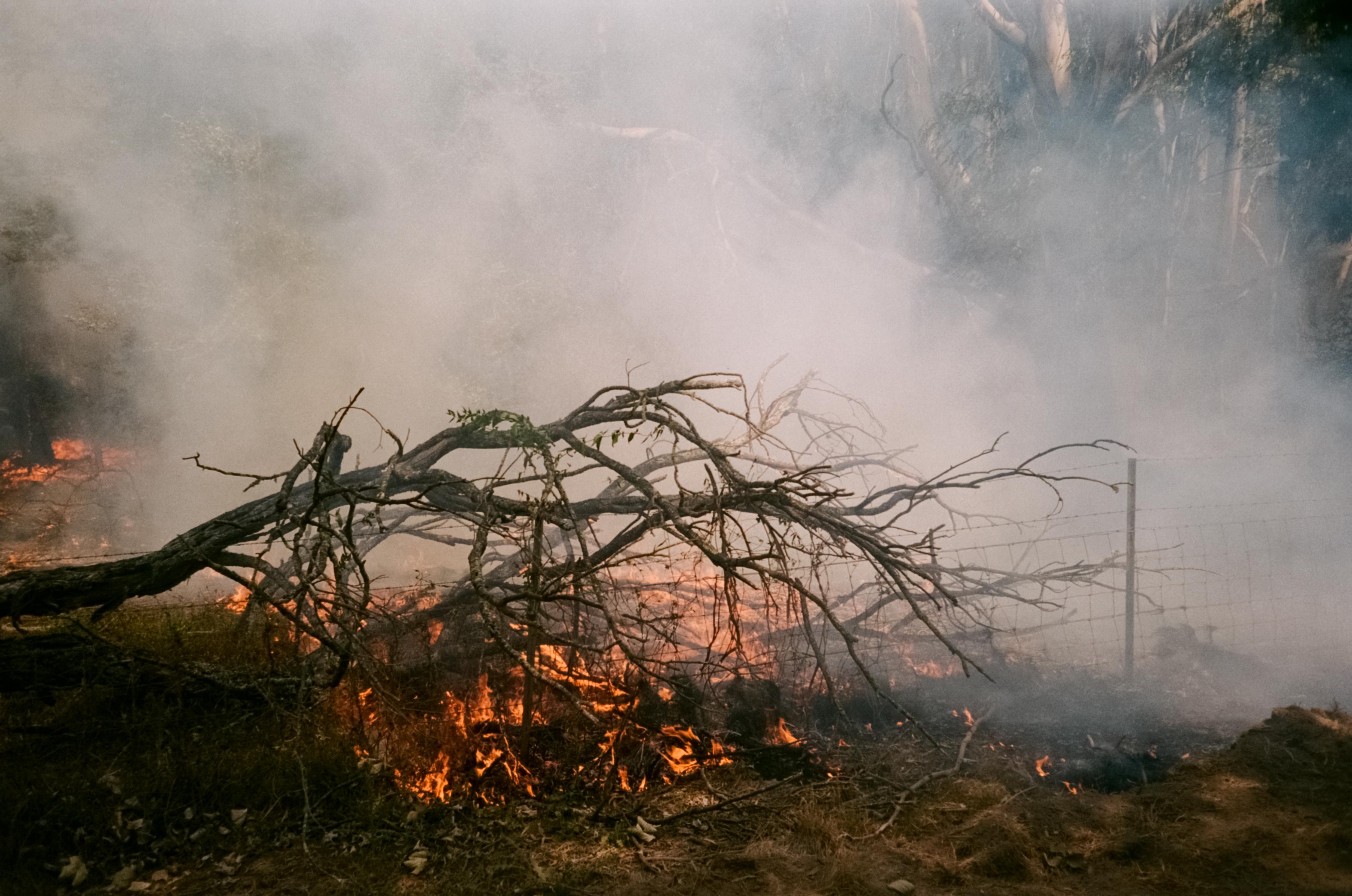 Fires in Australian forest