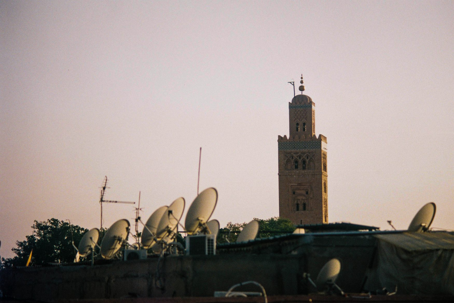Minaret and satellite fishes (Pic: Will Park)