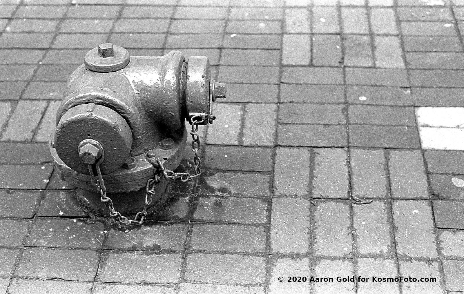 Fire hydrant (Pic: Aaron Gold)