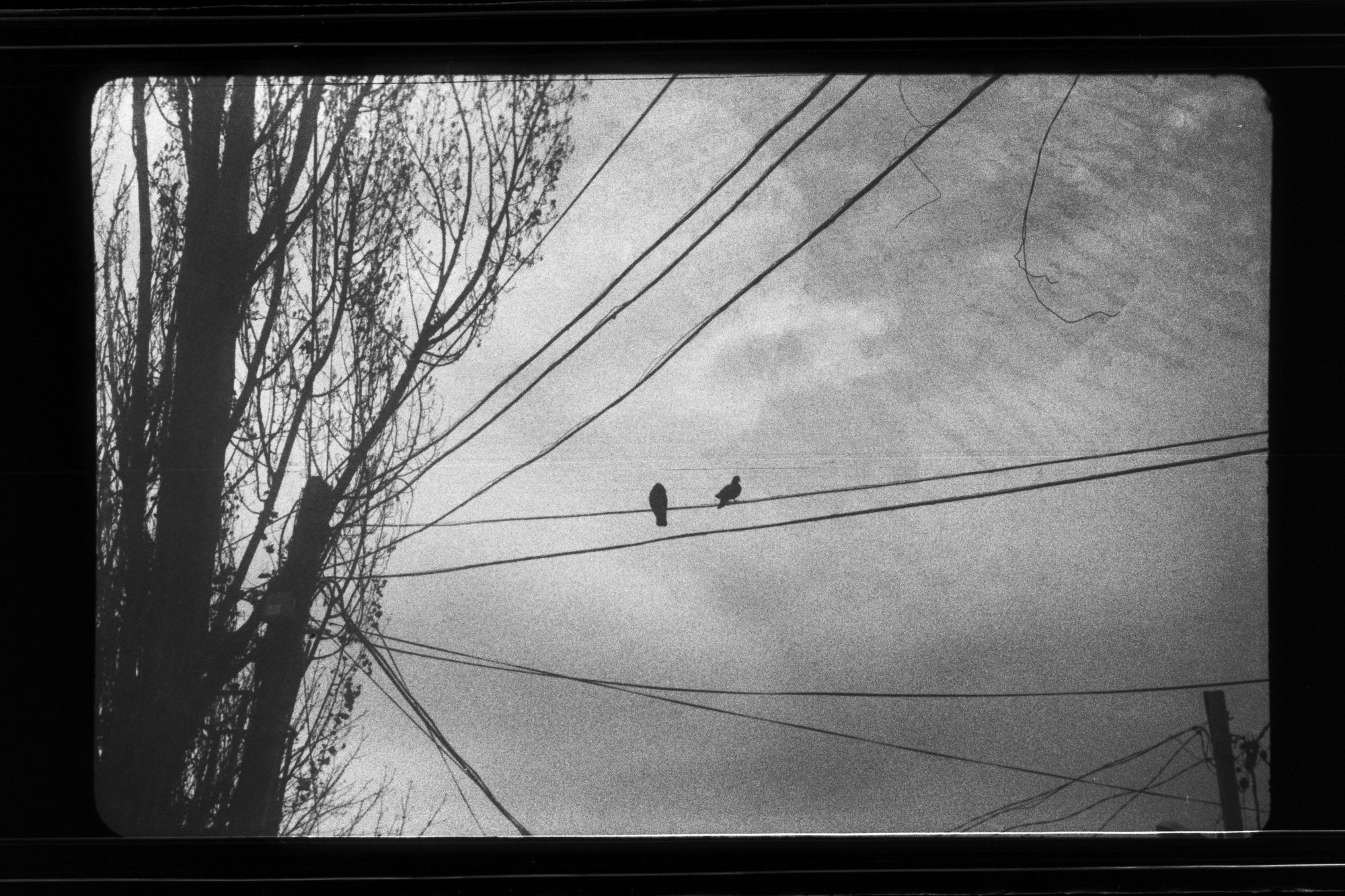 Birds on wire (Pic: Andrew Khludeyev)
