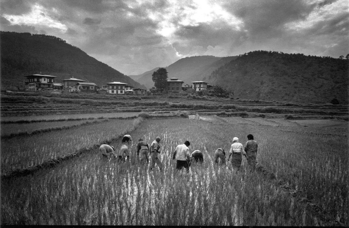 People in rice field (Pic: Lester Ledesma)