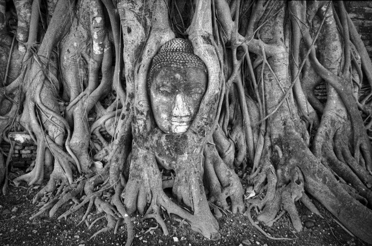 Buddha head in tree roots (Pic: Lester Ledesma)