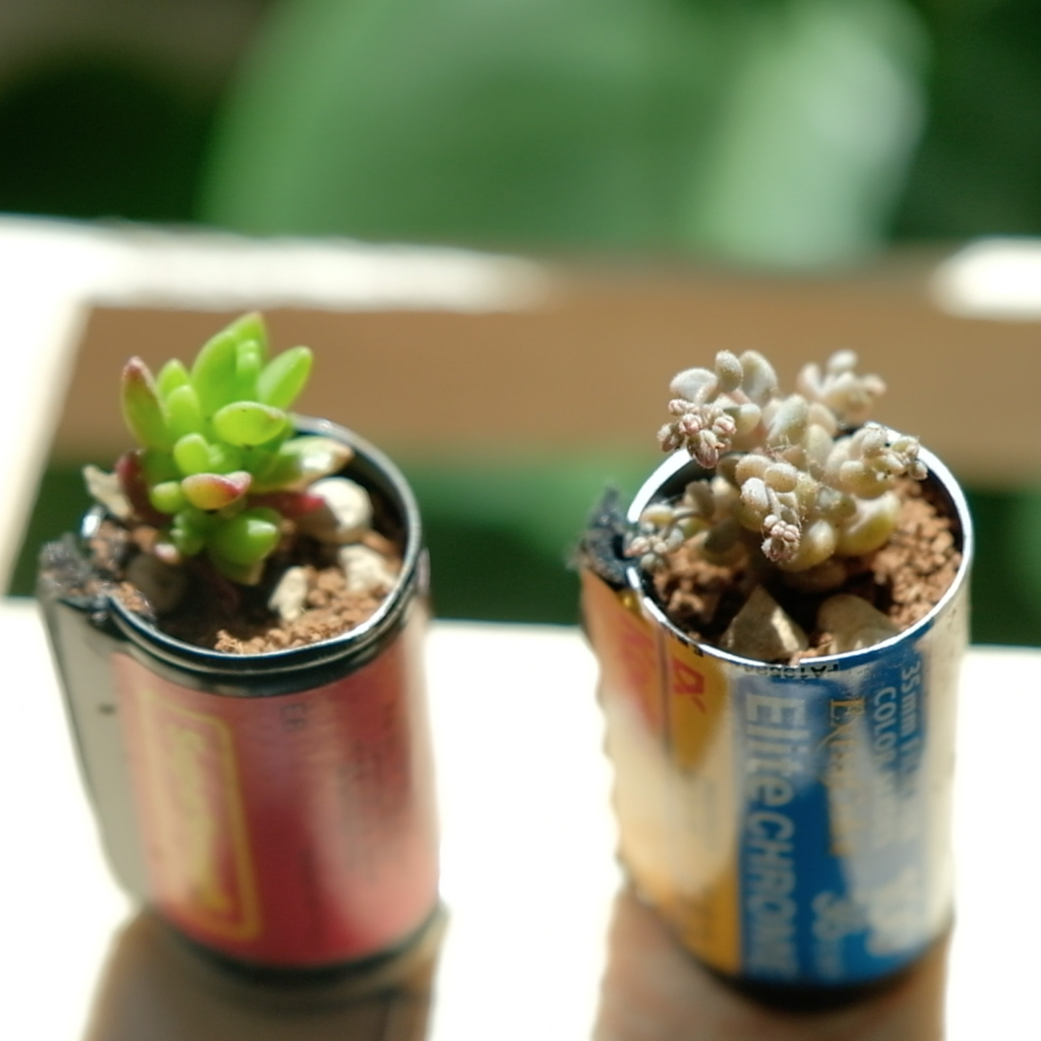 Seedlings in cassettes (Pic: Marina Llopis)