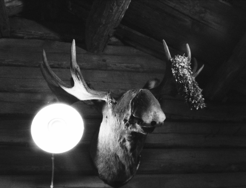 Moose head (Pic: Tobias Eriksson)