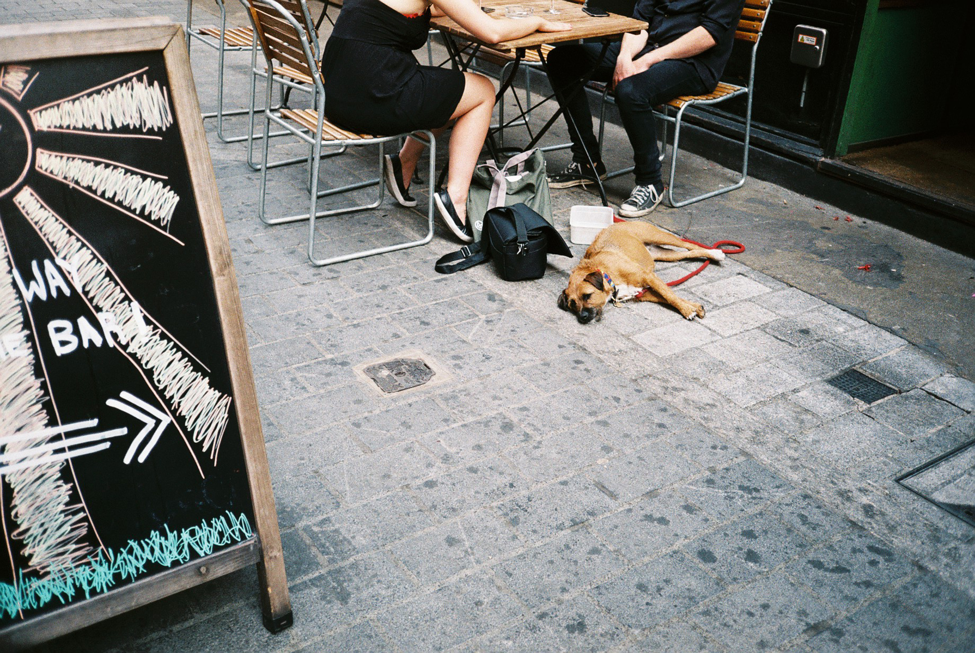 People dining with dog (Pic: Stephen Dowling)