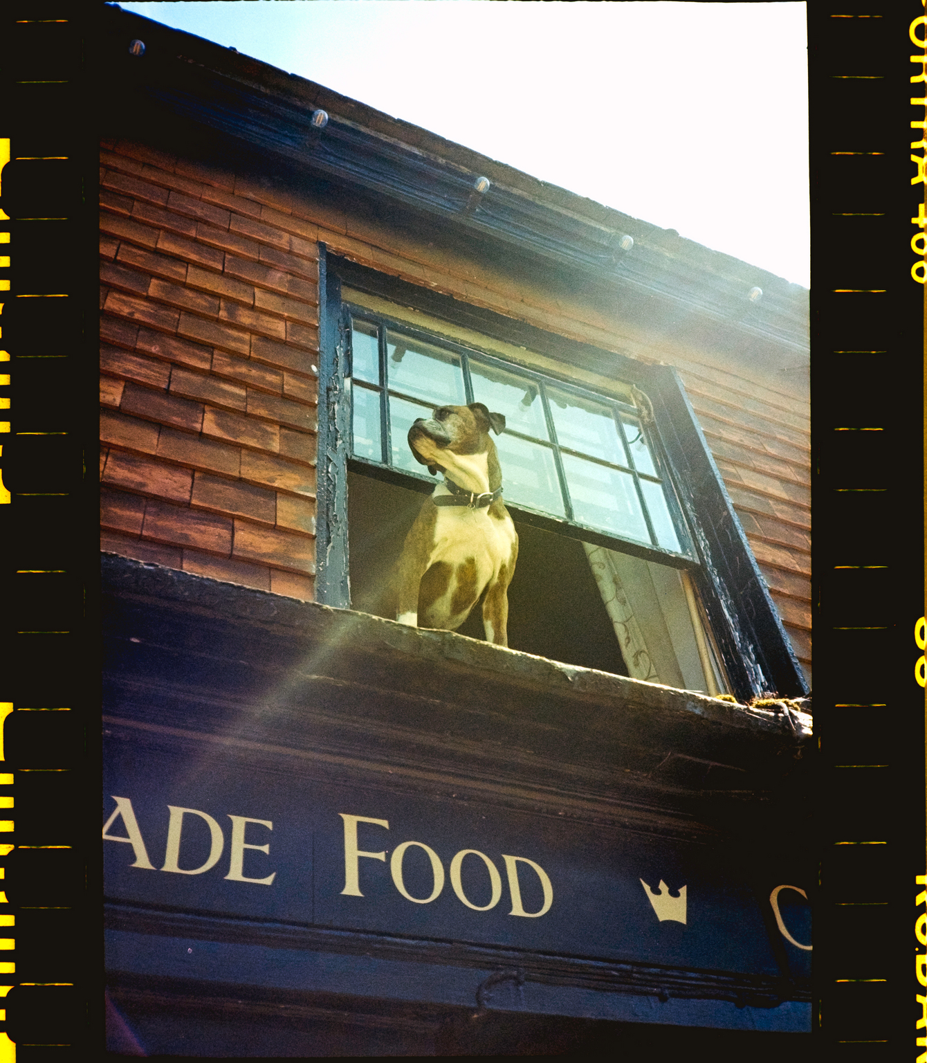 Dog in window (Pic: Andy Clad)
