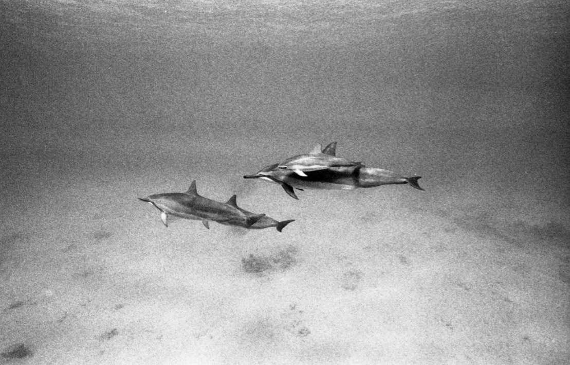 Dolphins and calf (Pic: Katharine Kollman)