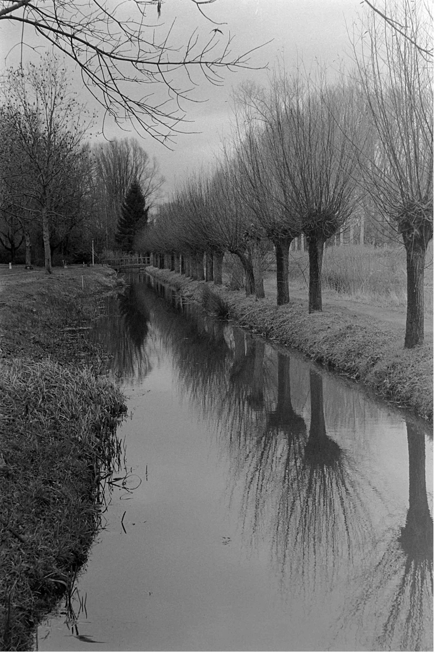 Canal and trees (Pic: Hubregt Visser)
