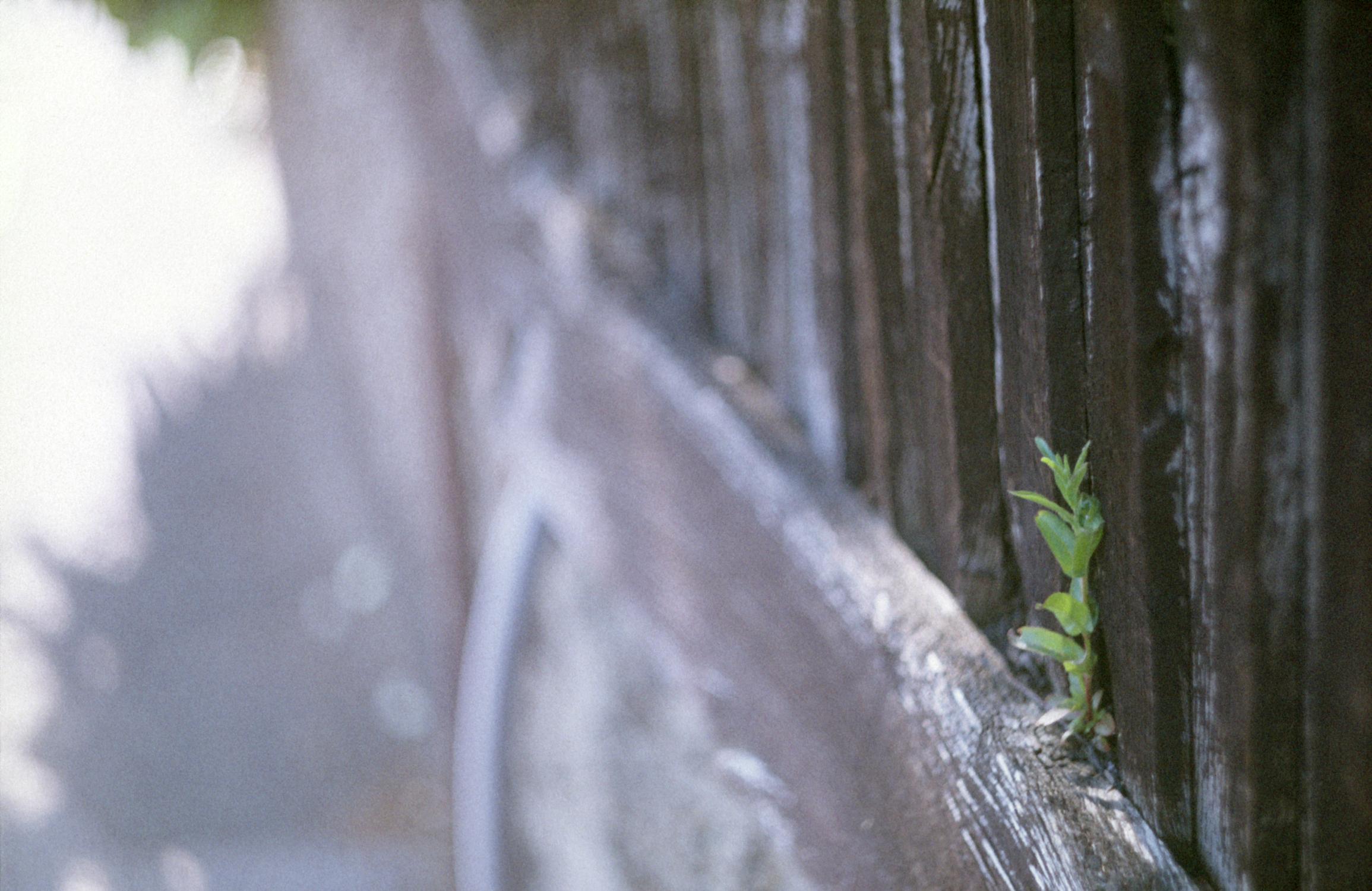 Shoot on wall (Pic: Stephen Dowling)