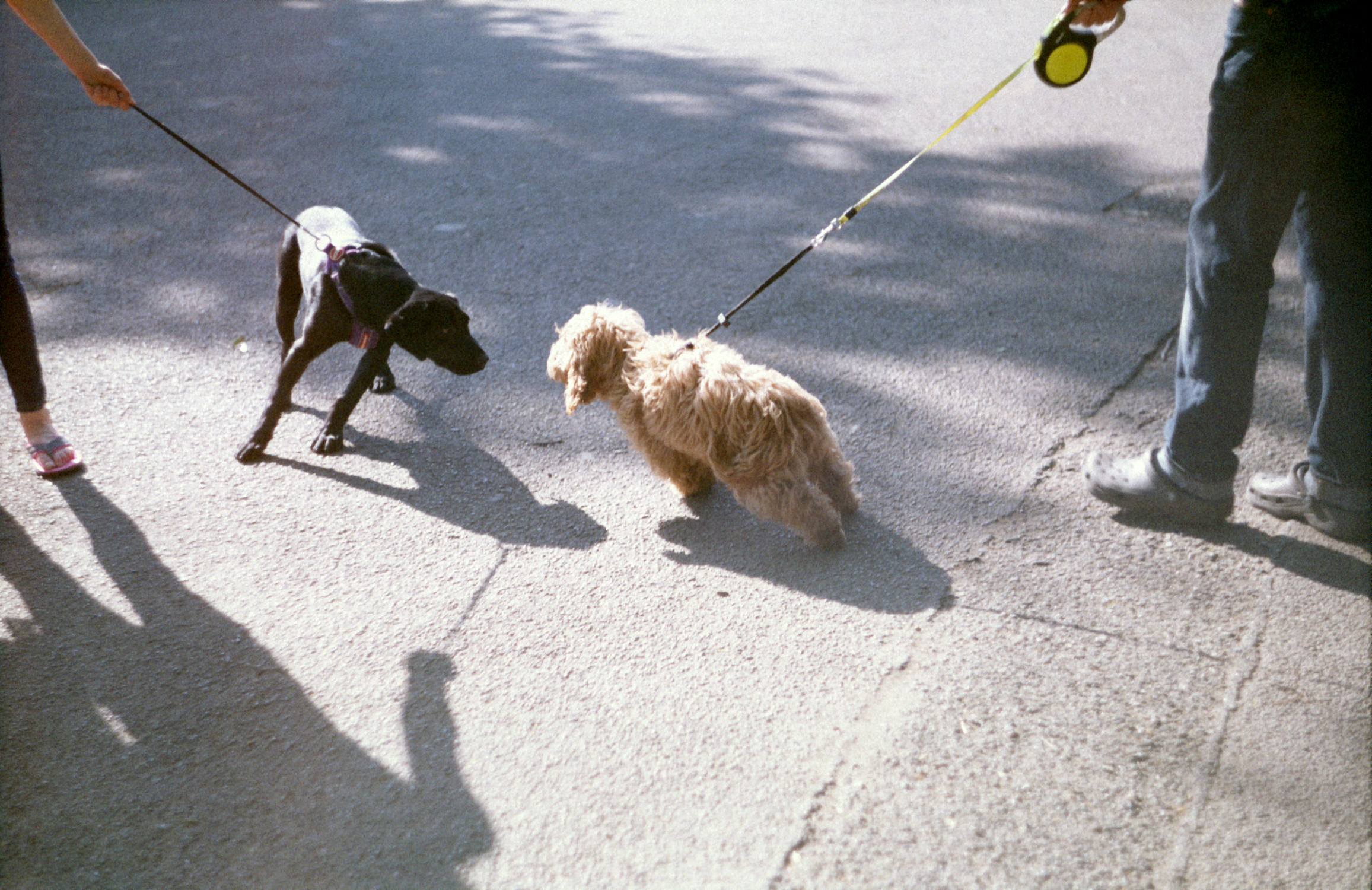 Dogs on leashes (Pic: Stephen Dowling)