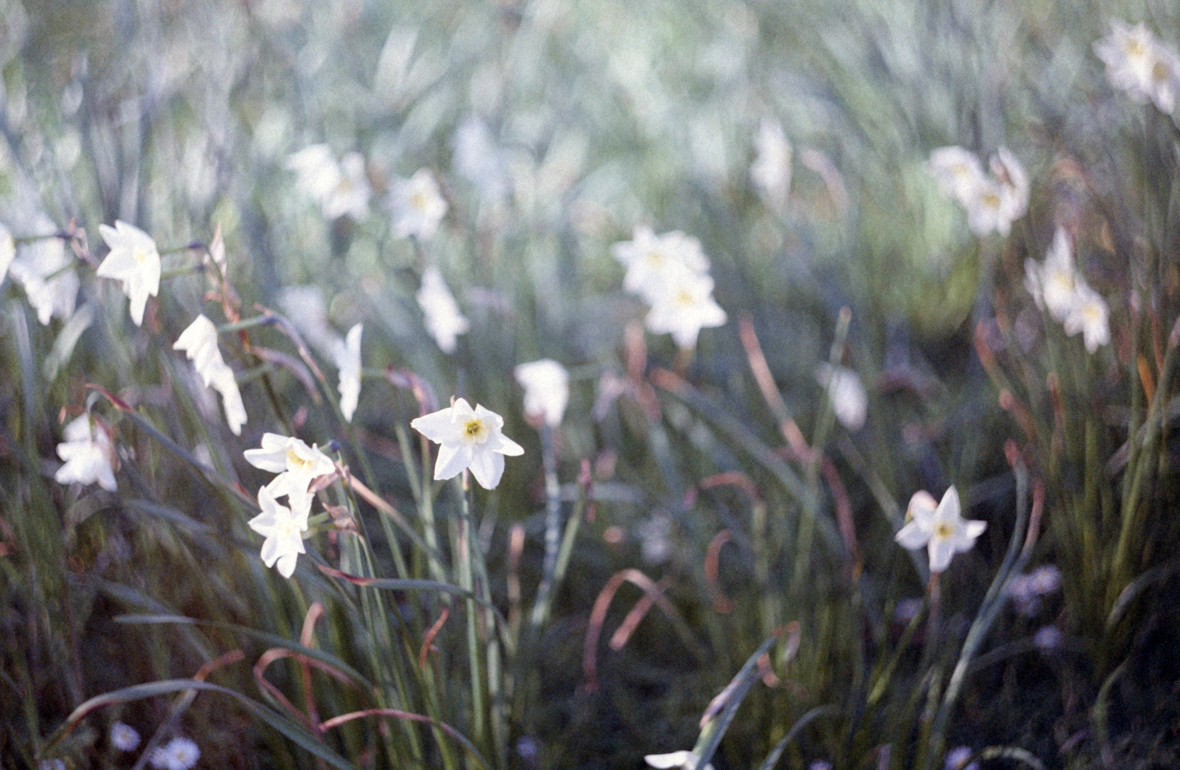 Blurred flowers (Pic: Stephen Dowling)