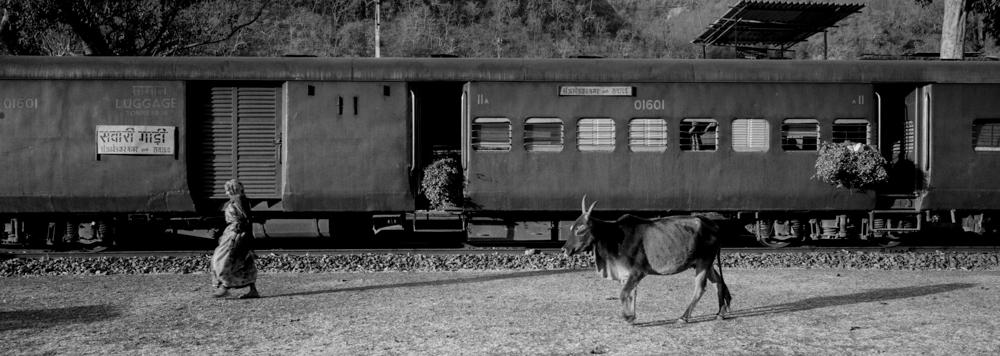 Woman and cow walking past train (Pic: Nandakumar Narasimhan)