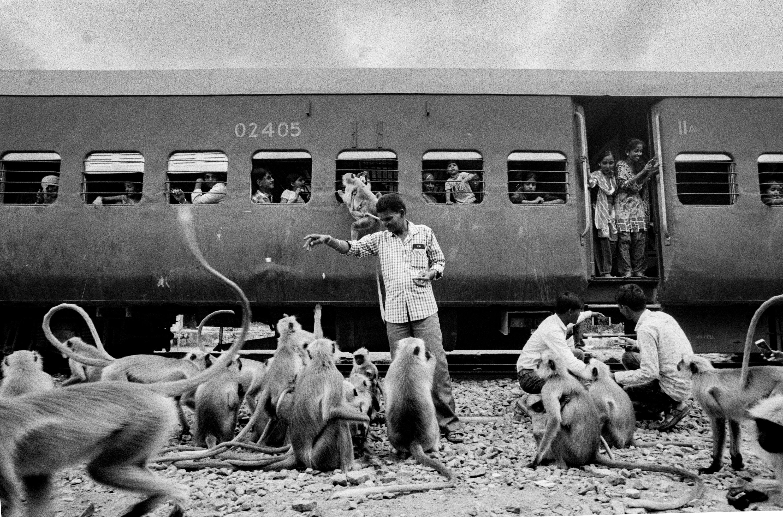 Monkeys gathered outside train (Pic: Nandakumar Narasimhan)
