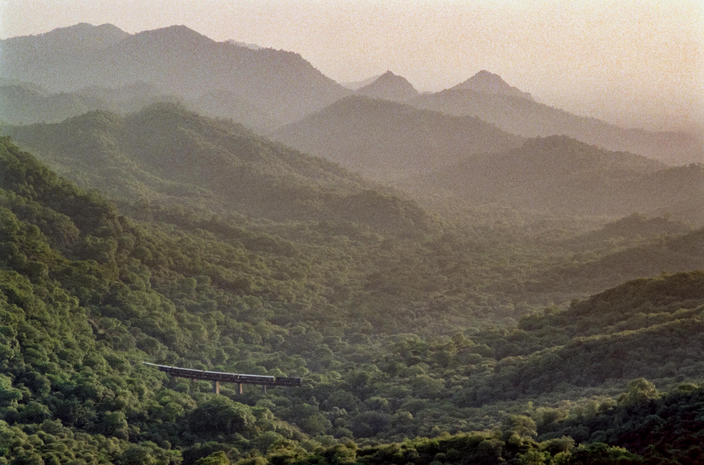 Indian train in forest (Pic: Nandakumar Narasimhan)
