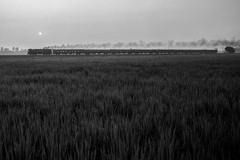 Train behind ricefield (Pic: Nandakumar Narasimhan)