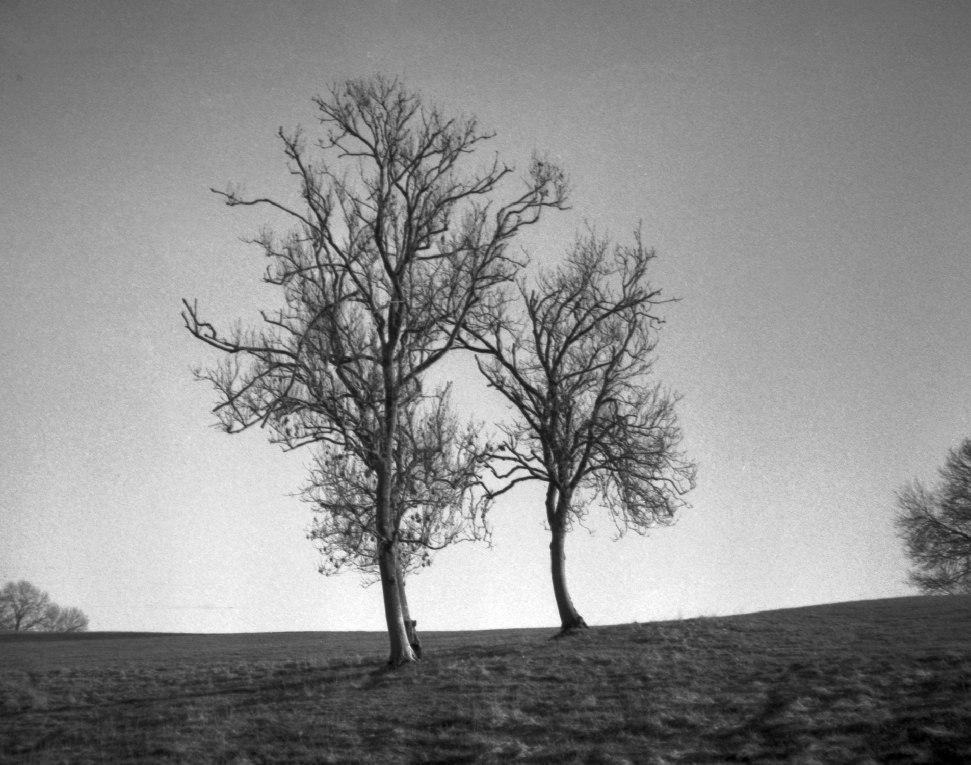Two trees on hill (Pic: Will Park)