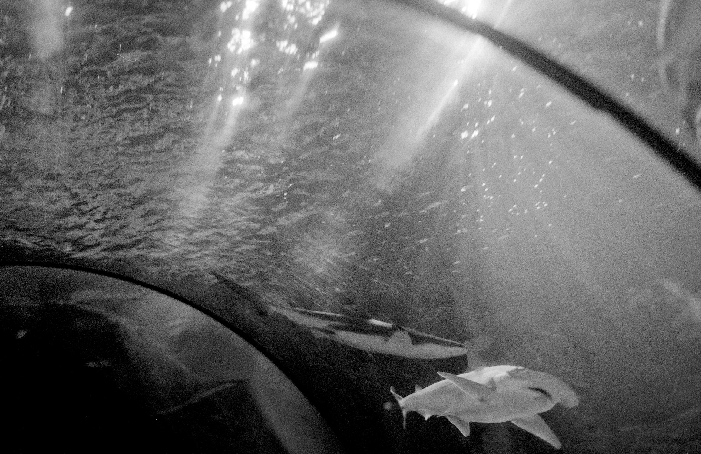 Sharks in aquarium tank (Pic: Stephen Dowling)