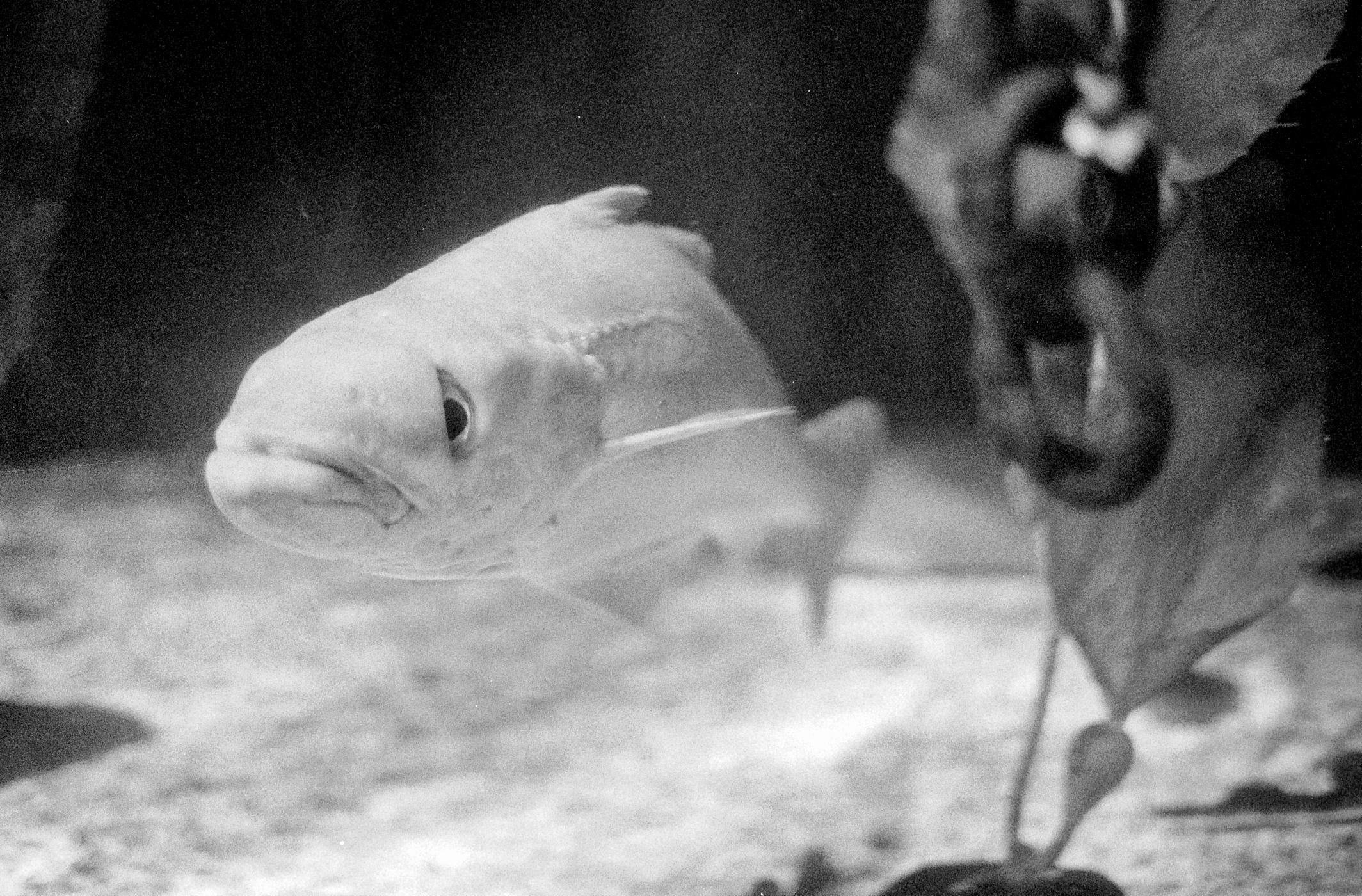 Fish near kelp (Pic: Stephen Dowling)