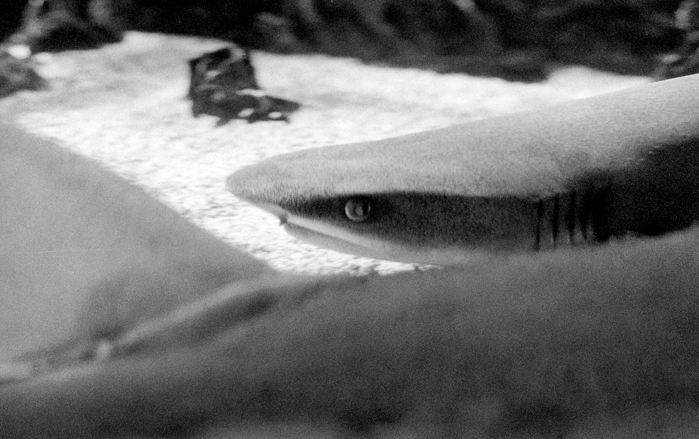 Sharks resting on bottom of tank (All pics: Stephen Dowling)