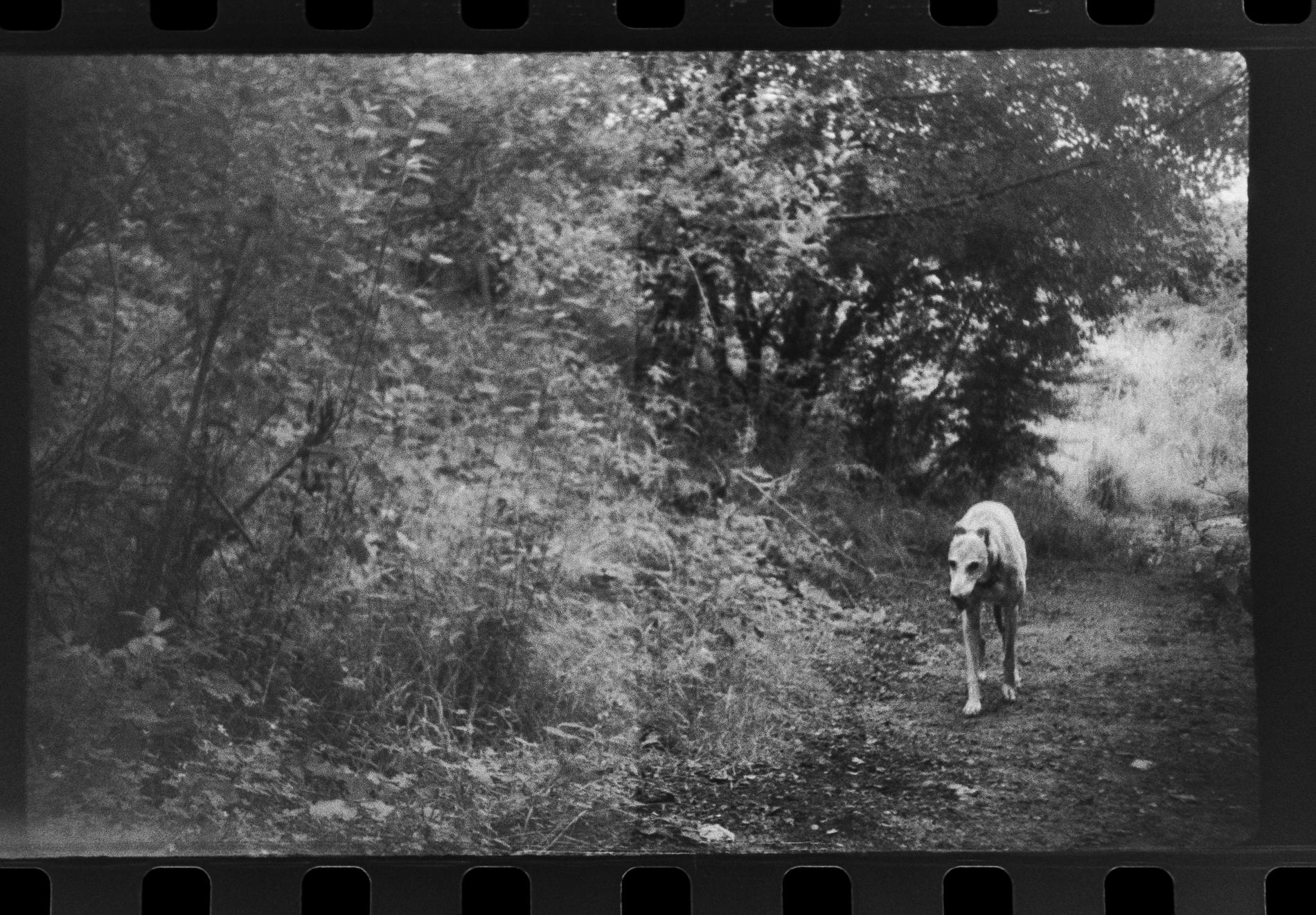 Dog walking on trail (Pic: Toby Van de Velde)