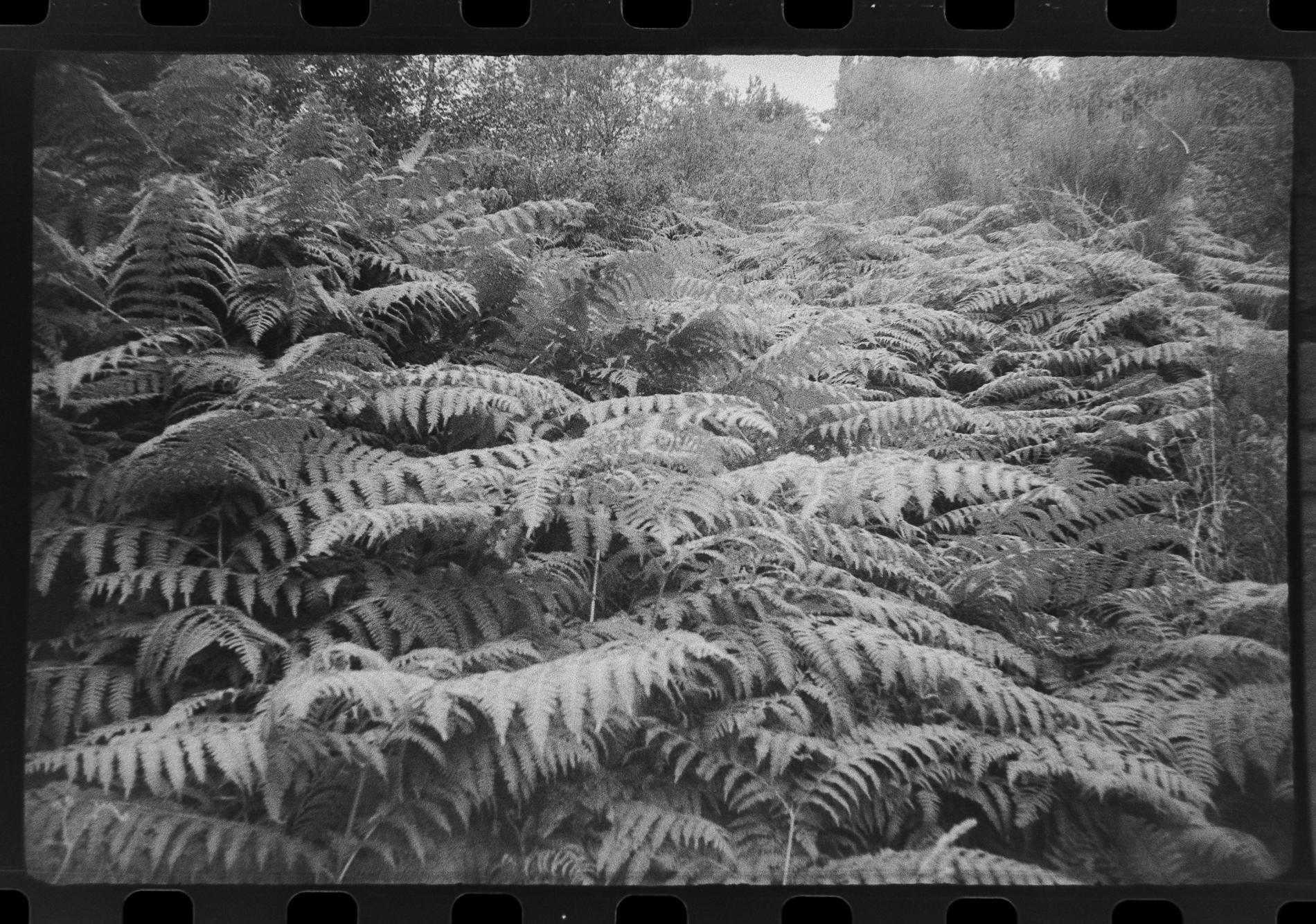 Ferns (Pic: Toby Van de Velde)