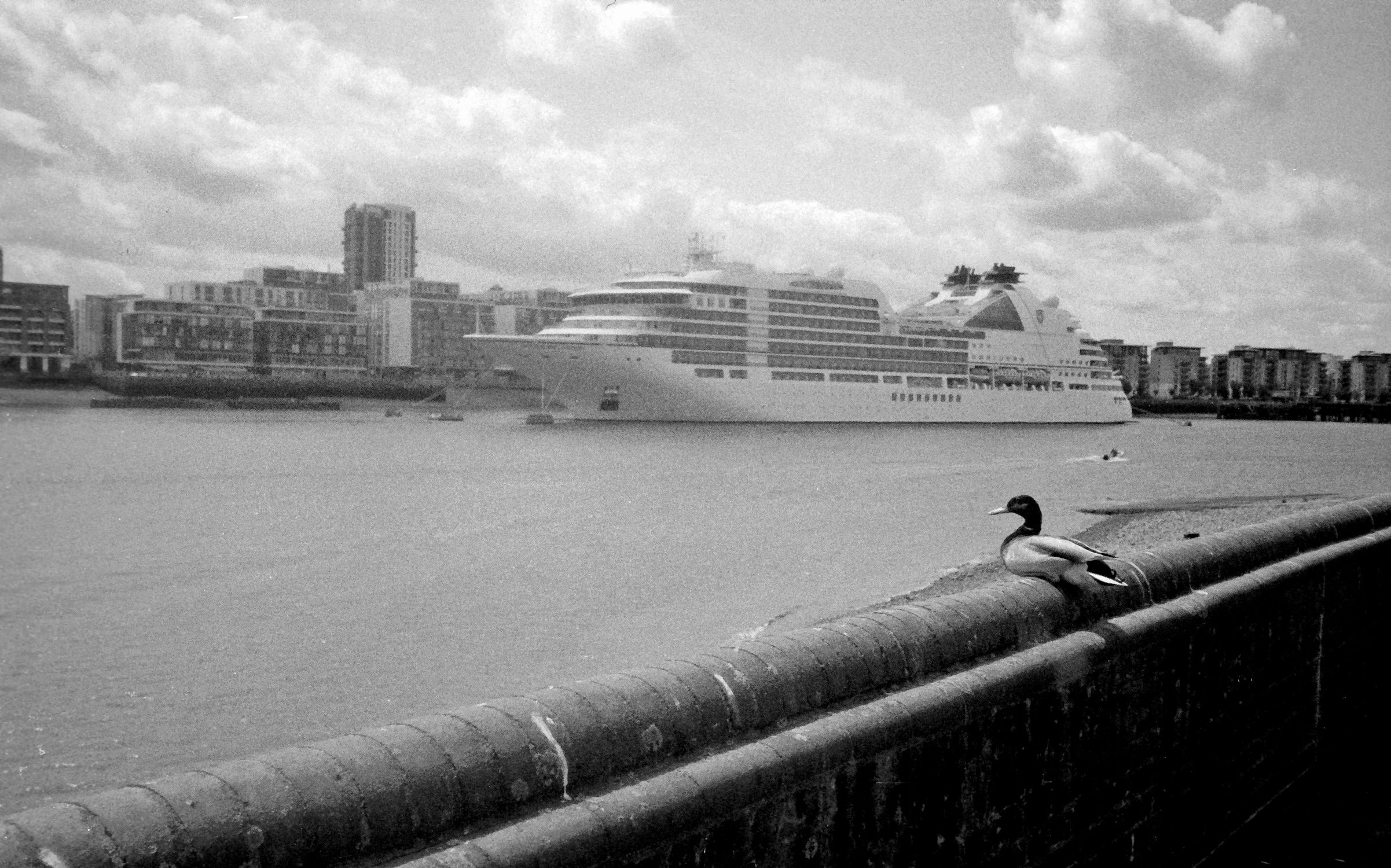 Duck on wall and cruise ship (Pic: Stephen Dowling)